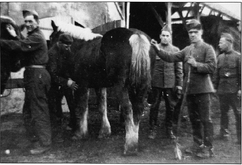 Overal in Wamel waren de soldaten en hun paarden ondergebracht.
