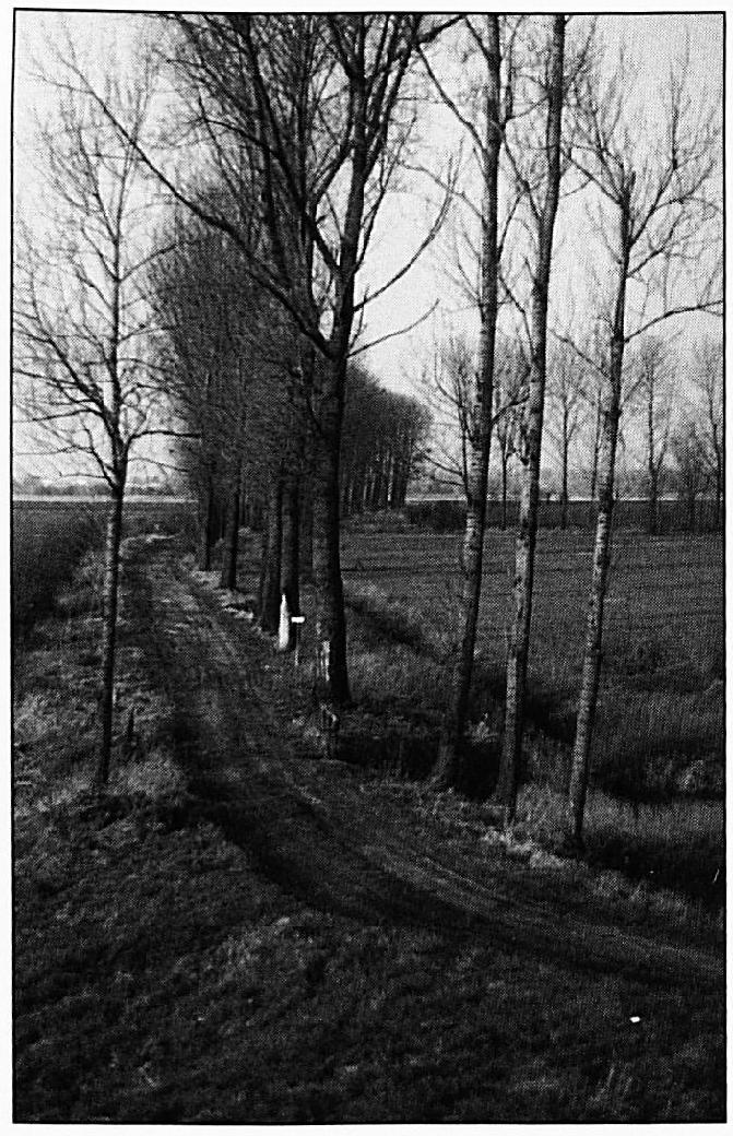 De Waalsteeg, die vanaf de dijk naar de zomerkade loopt. Bij de populieren op de achtergrond rechts, komt de Oude Waalsteeg op de Waalsteeg uit. Op de vorige foto was goed te zien, dat dit stuk rond 1550 nog niet bestond.