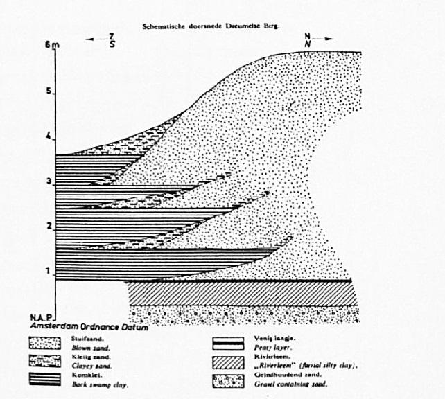 Dwarsdoorsnede van de Dreumelse Berg, een rivierduin zoals er meerderen zijn in Maas en Waal; bijvoorbeeld de heuvels bij Bergharen en Hemen. Op grond van bepaalde perceelsnamen is het aannemelijk, dat ook in de Wamelse polder meerdere van deze verhogingen gelegen hebben. (tekening prof. Pons)