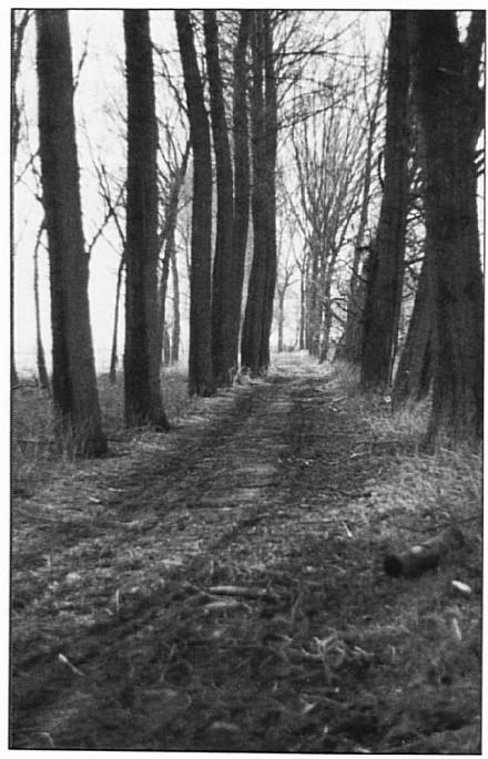 De Oude Waalsteeg in 1993. Minstens 1600 jaar daarvoor was deze weg al in gebruik bij de Romeinen. Daarna was dit pad voor vele generaties de hoofdverbindingsweg met Tiel.