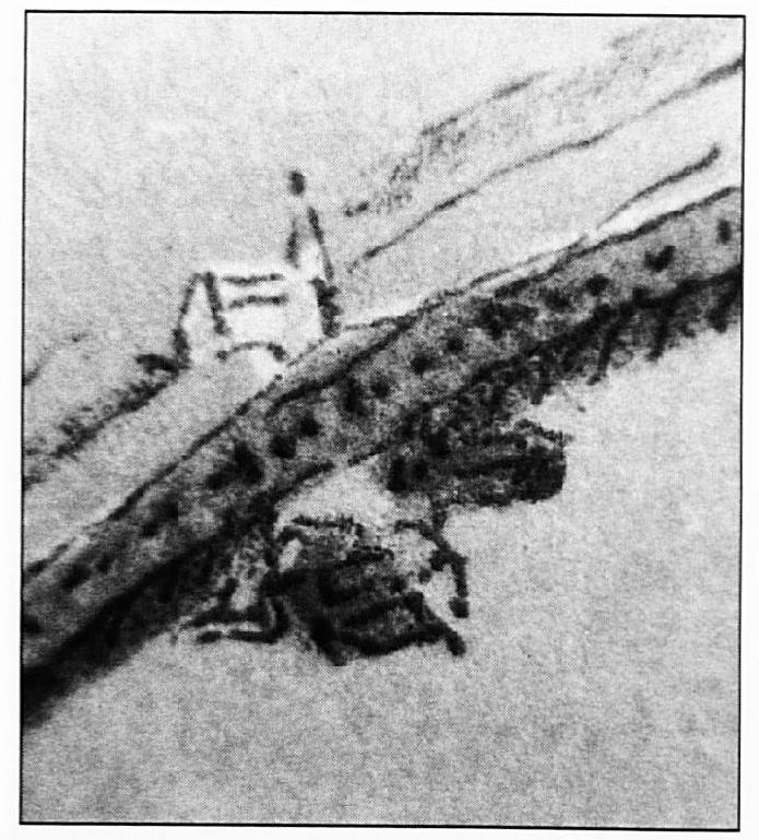 Op deze detail-foto van de kaart van Van Deventer zien we, dat er duidelijk een kapel of een kerkje aan de buitenkant van de dijk getekend is. Het is niet geheel zeker of deze kapel stond op de plaats waar nu de Buiten Wiel is, of dat het gezocht moet worden bij de Oude Wiel.
