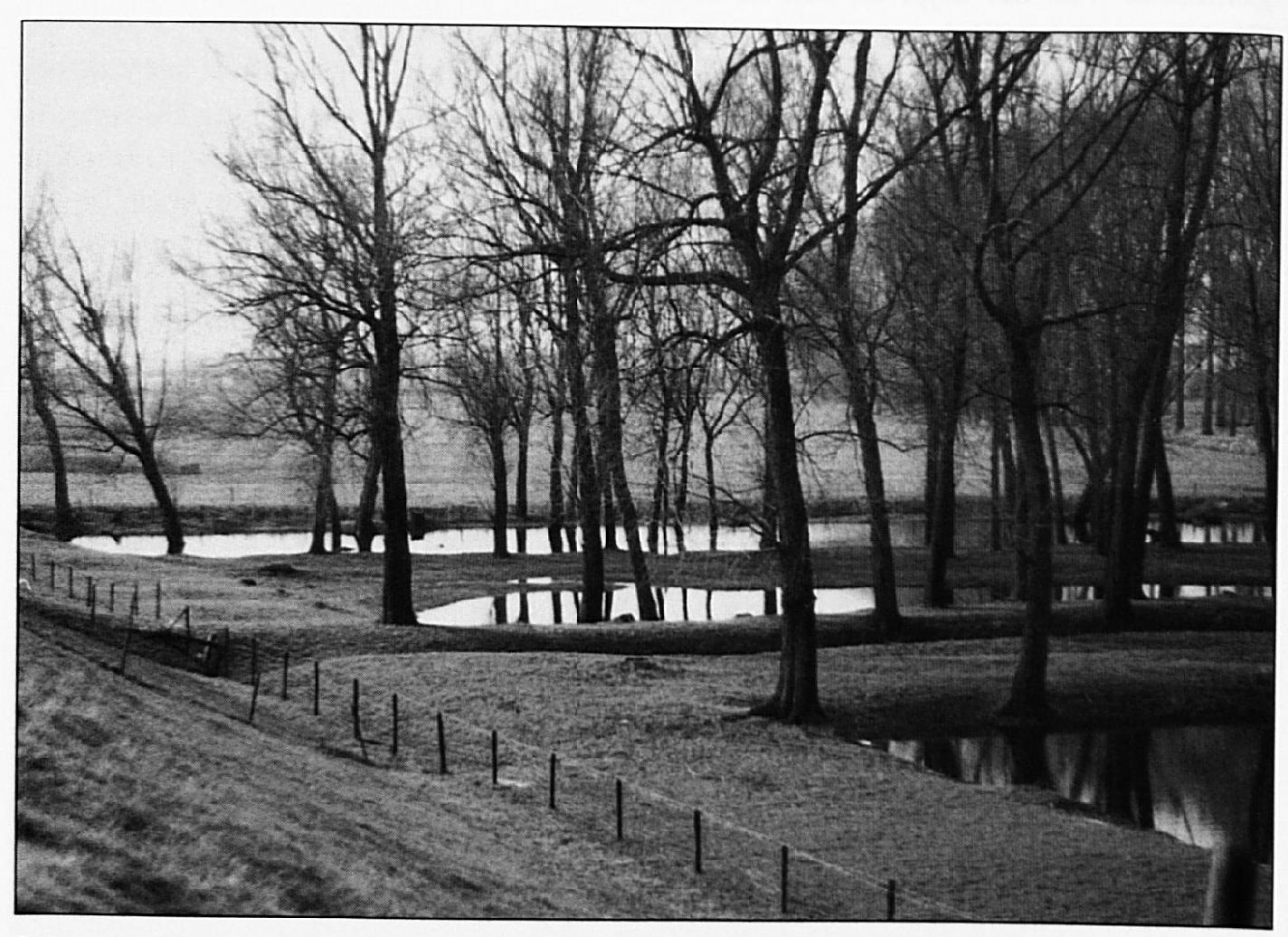 In het gebied tussen de Oude Waalsteeg en de huidige groendijk stonden vroeger boerderijen. De foto hierboven toont de huidige situatie.